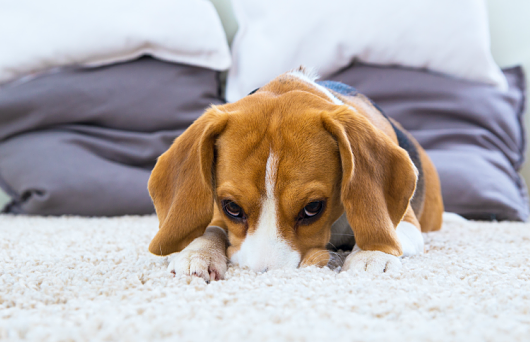 530-342-a53a3d-dog530 Decluttering Your Home for a Better Spring Clean