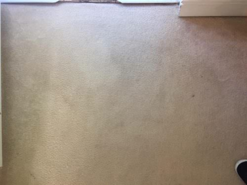 "the rug doctor – carpet cleaning review"" (guest blog by hannah"